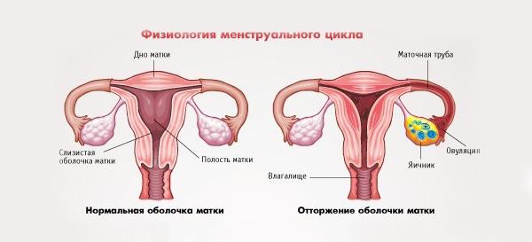 Почему не начинаются месячные, если нет беременности