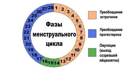 Продолжительность овуляции и способы ее определения