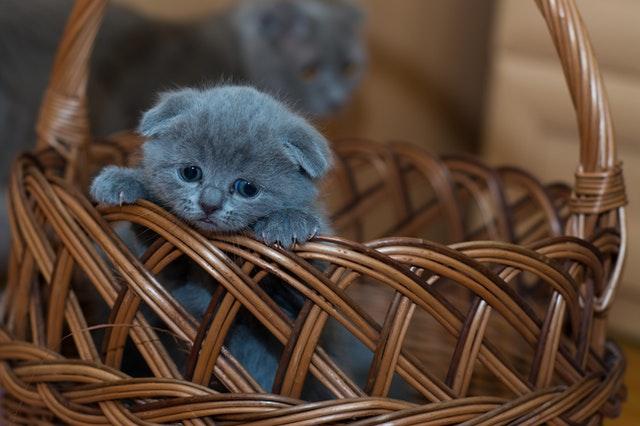 Спасние тонущего котенка